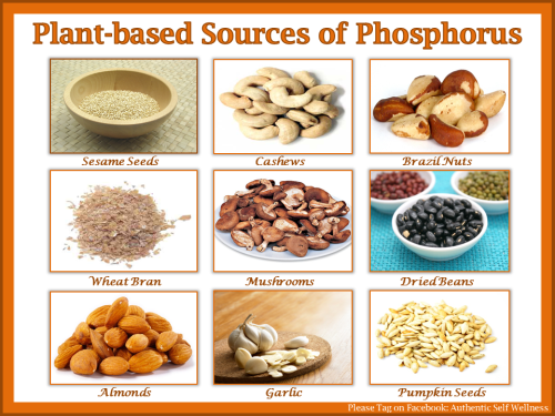 Plant-Based Sources of Phosporus