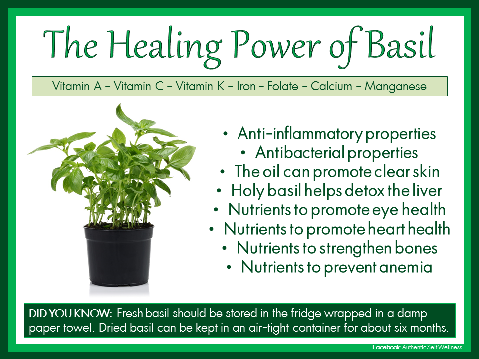 The Benefits of Basil